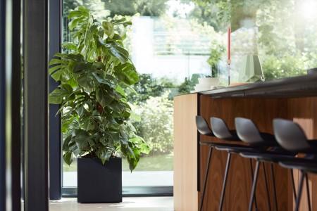 Rehner Gartencenter | Für jede Topfpflanze den passenden Pflanzkübel